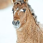 Colt In Snow by Michael Cummings