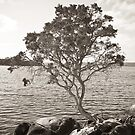 Tree and Rock 2 by pennyswork