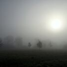 Foggy Field by John Dalkin