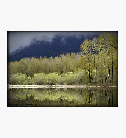 Trees of Spring Photographic Print