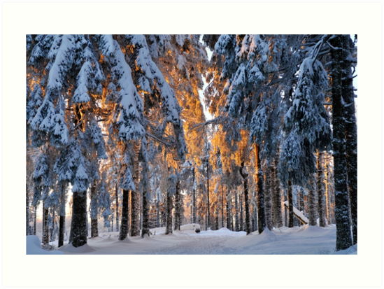 « Forêt en hiver » par Jean Isenmann