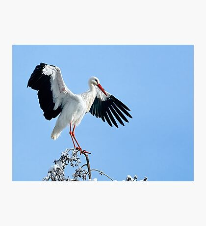 White Stork On Snow Covered Tree Photographic Print