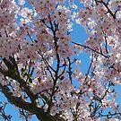 Spring Blossom by Geraldine Miller