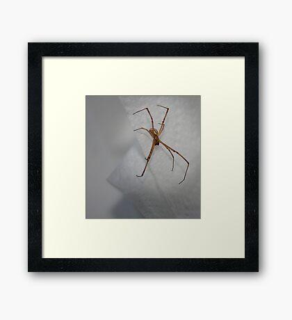 Spider In My Sink! Framed Print