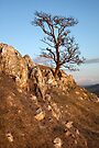 The Inspirational Tree by SteveMG