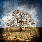 "Tree on Hill ""Textured"" by Carlos Restrepo"