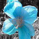 Blue by Martina Fagan