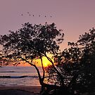 Pacific Sunset by Lanis Rossi