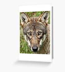 Canis Lupus Greeting Card