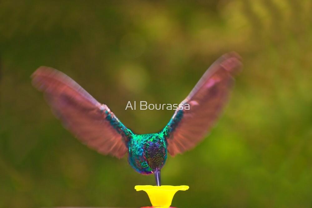 Brilliant Tom by Al Bourassa