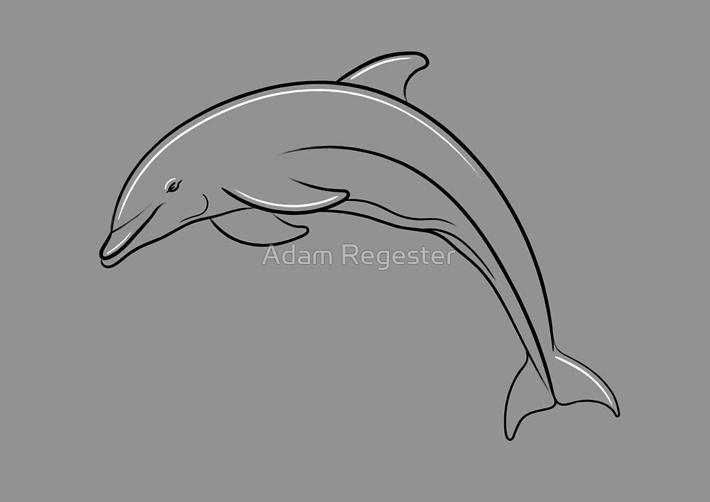 Dolphin Line Drawing by Adam Regester