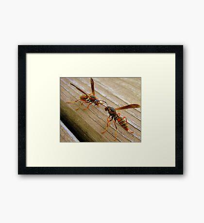 Dueling Wasps Framed Print