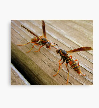 Dueling Wasps Canvas Print