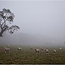 Foggy Morning, Mt Barker Summit by Barb Leopold