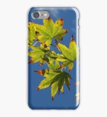 Blue Sky, Autumn Leaves iPhone Case/Skin