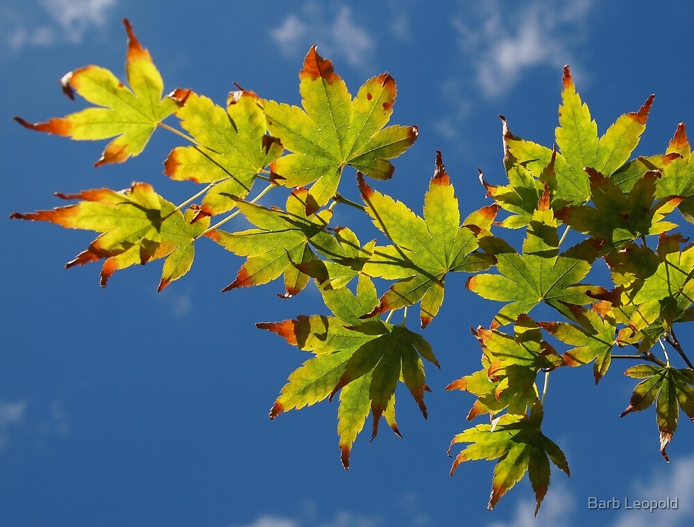 Blue Sky, Autumn Leaves by Barb Leopold