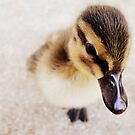 Little Peep by Ryan  Fisher
