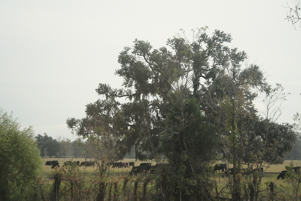 Hidden Cows by Frank Raymond