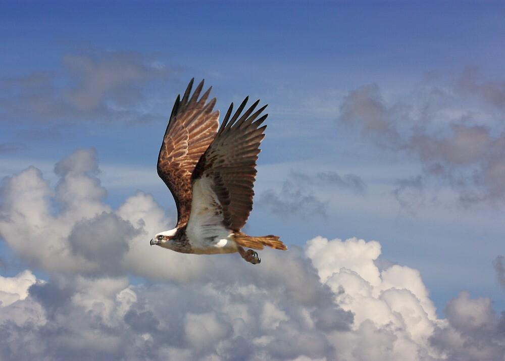 Fly By! by byronbackyard