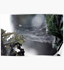 Spiderwebs Poster