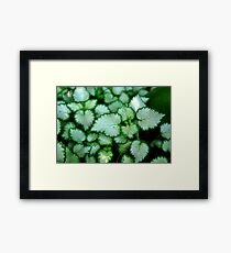 Silver Leaves - Rancho Cucamonga, CA Framed Print