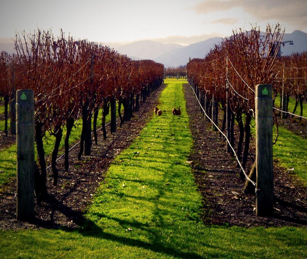 Chooks in the Vineyard by Kiwikels