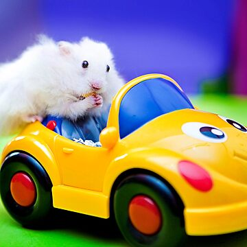 driving hamster by puspi