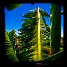 Banana Tree by ADMarshall
