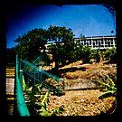 Banana Plantation by ADMarshall