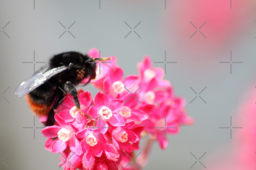 Busy Bee 2 by Gemma  Simpson