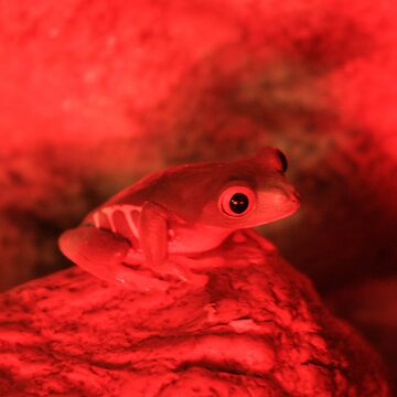 Red Lighted Red Eye by tommyb85