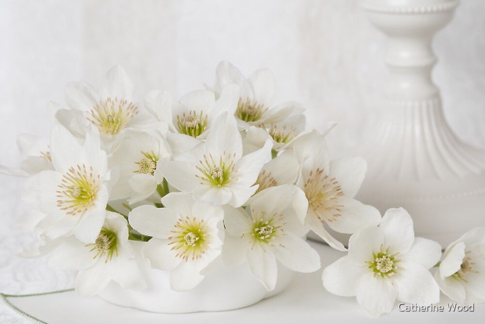 Clematis in White by Catherine Wood