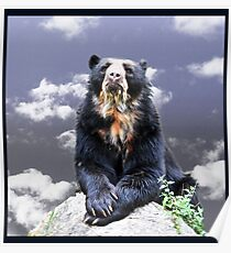 Andean Bear Poster