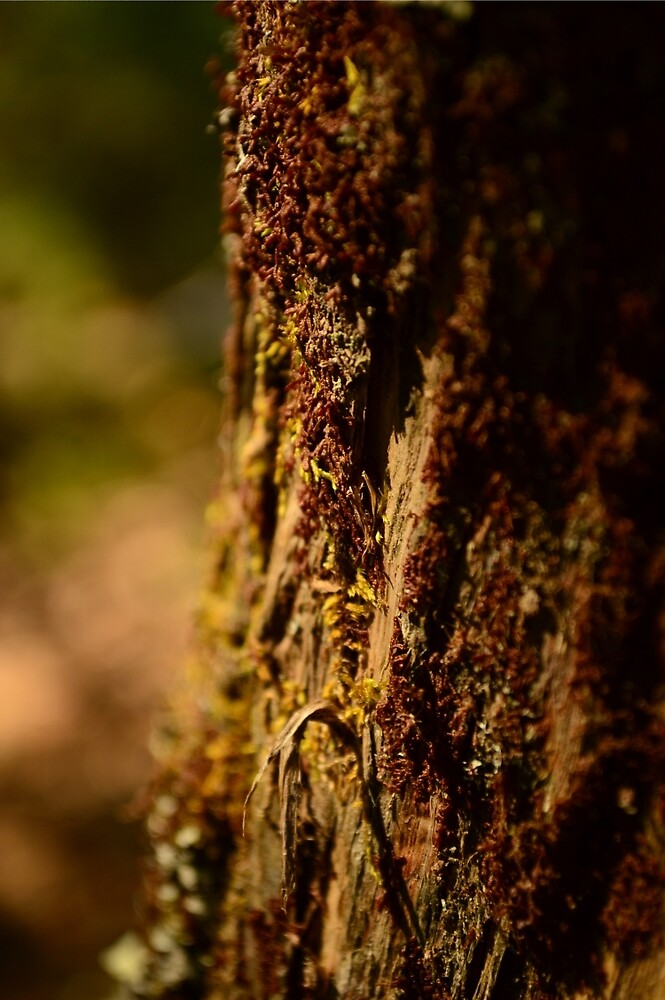 Tree lichen by hannahduston