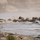 The Great Migration by CriscoPhotos