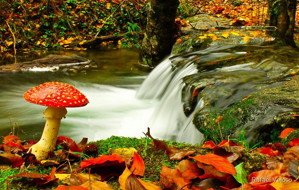 Fall Season by Rafael Veloso