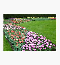 Spring Triangles  Photographic Print