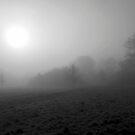 Foggy Morning by John Dalkin