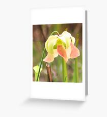 Pitcher Plant Bloom Greeting Card