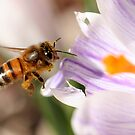 Busy Bee by love2shoot