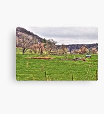 Lonely Pasture Canvas Print