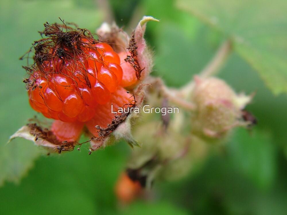Wild berry by Laura Grogan