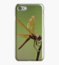 Eastern Amberwing iPhone Case/Skin