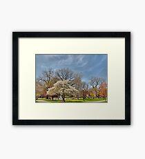 Commomwealth - Boston Framed Print