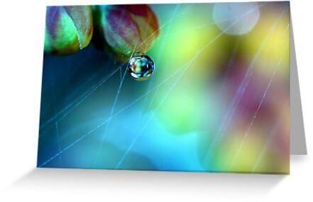 Rainbow Web by Sharon Johnstone