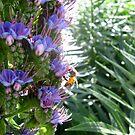 Violet Bee by Jennifer  Gaillard