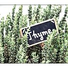 Thyme by Kasia-D