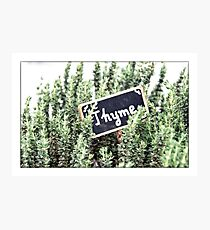 Thyme Photographic Print