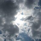 Red Tail Hawk in the Sky by Jennifer  Gaillard