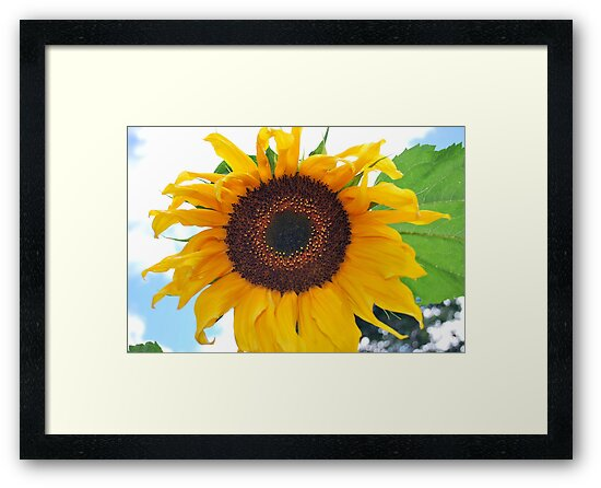 Sunflower by Stan Owen